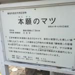 正定寺に、お墓の現地確認に行ってまいりました【静岡県 藤枝市】