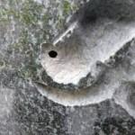 お墓の文字のところに虫が巣を作る??
