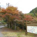 藤枝市瀬戸ノ谷で秋を見つけました。【静岡県藤枝市】
